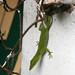 Vinales Lizard Day 5