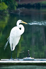 Great Egret (tcsphotog) Tags: kiawah greategret nikond80 photofaceoffwinner pfogold