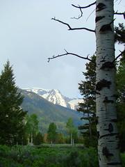 (hdrews333) Tags: mountains tetons