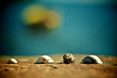 She Sells Seashells (Nick Today) Tags: blue red green water norway rock seashells wednesday happy boat dof bokeh shell hbw