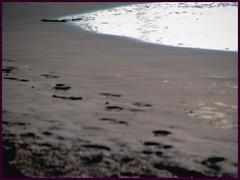 Wildwood (PHOTOPHANATIC1) Tags: nj wildwood oceanimages