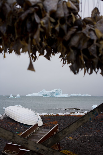 Massive icebergs hover off the shore