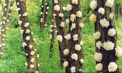 Witte fungus op boom