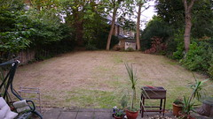 my garden in richmond (CameRAj Pictures) Tags: mybackgarden mylawn spindlypalm levelledandshorngrass twoashtrees