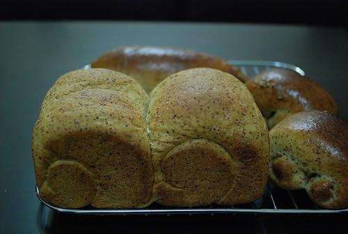 小麥胚芽土司-1