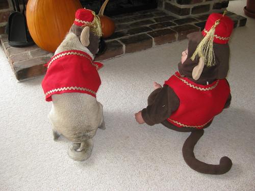 Happy Halloween Tails