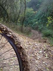 situazione copertoni dopo calti callegaro (Valsanzibio, Veneto, Italy) Photo