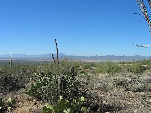 desert museum-4