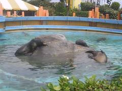PIC_0094 (scubawatters) Tags: hawaii oahu blowhole sealifepark