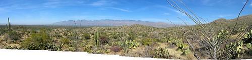 saguaro panorama copy