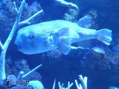 Seattle aquarium (Aaron Holmes) Tags: ocean mobile phone helio