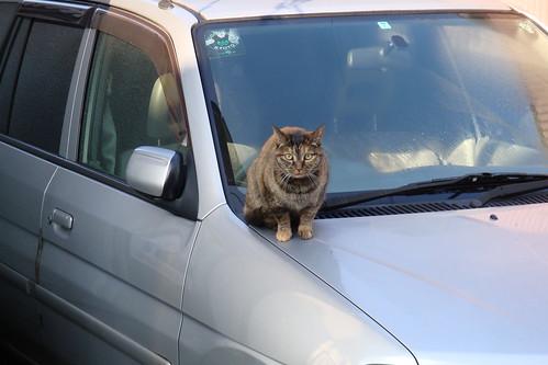 通勤じゃないけど通勤路の猫