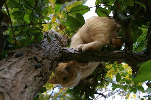 Stray Cat #19