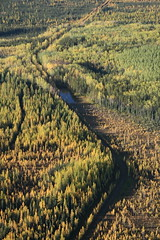 Boreal near Ft McMurray Airport - 01 (pembina.institute) Tags: forest fort mcmurray boreal