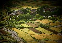 尼西村 tibetan village
