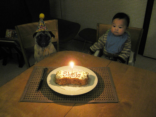 Happy 5th B-day Shelby