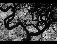 """ Puzzled by Nature"" (mcazadi) Tags: light bw white black detail tree silhouette dark nikon branches tunnel puzzle trunk fullframe shape figures blackwhitephotos mywinners abigfave d700 damniwishidtakenthat"