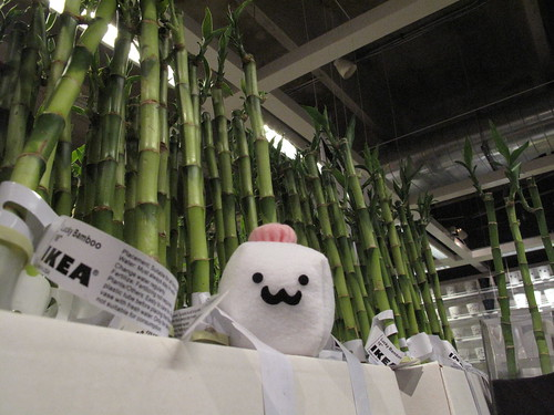 Tofu Baby's lucky day at Ikea!