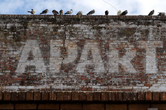 Apart (David Gallagher) Tags: sanfrancisco sign apartments bricks foundinsf gwsf5party gwsflexicon