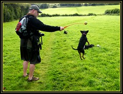 Flying Fudge (amy's antics) Tags: trees man dogs field grass hat ball bag glasses shoes legs terrier hedge leads ballthrower yorkierussell