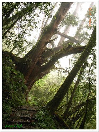 宜蘭太平山、美食之旅(G)119