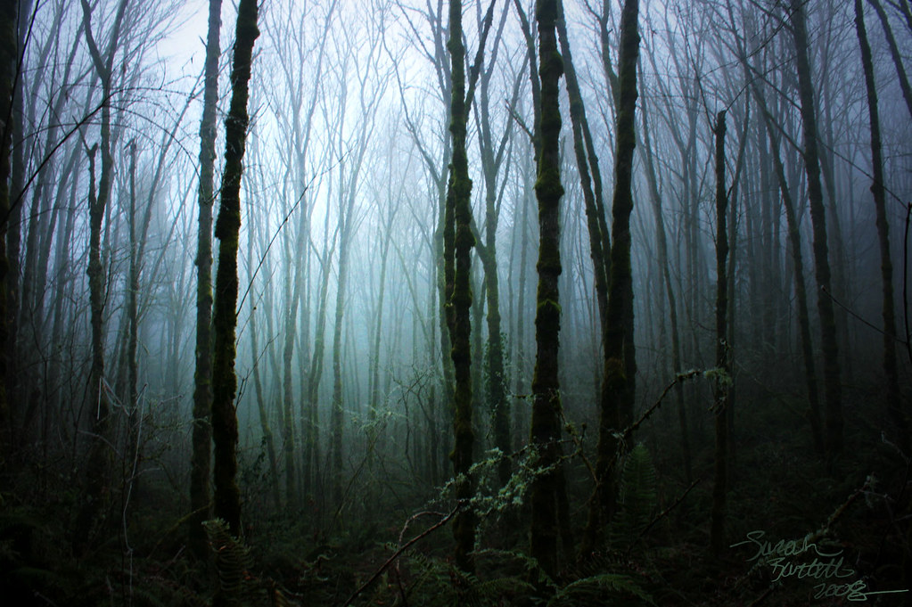 The Incoming Fog (Story)