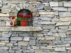 wallflower or wallpaper