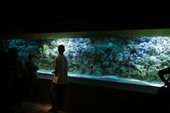 IMG_5050.JPG (mkudel) Tags: aquarium kentucky newport newportaquarium