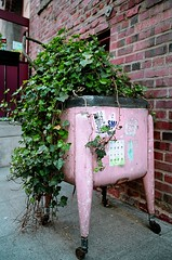 Recycled Planter (Georgie_grrl) Tags: seattle pink washington portable unitedstates ivy pentaxk1000 onwheels roadtriptoseattle laundrysink rikenon12828mm recycledplanter
