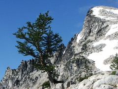 Larch and Little Annapurna