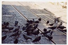 Palomas (Natalia Lobato) Tags: road street calle eating dove natalia palomas comiendo lobato natalialobato