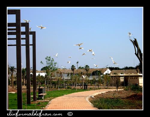 Garzas en el Parque Juan Carlos I