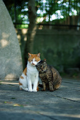 cat_0003 (Say Cheese !! part.1) (PyunpyunMaru) Tags: japan cat  furryfriends straycats bestofcats catmoments thecatwhoturnedonandoff