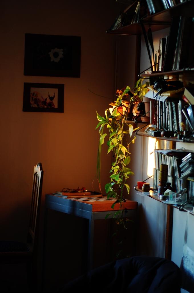planta ventana 04