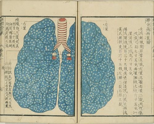 Kaitai Hatsumou - lungs