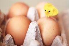 Confusing Eggs