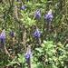 external image 2869441955_07444a940a_s.jpg