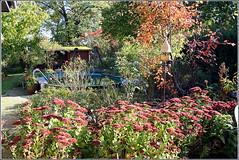 Terrasse_0653_wb (Aureusbay) Tags: autumn pool garden backyard colours terrace herbst fallfoliage ef2035 favoritegarden