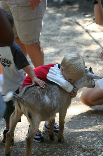 Hugging a goat - Step 3