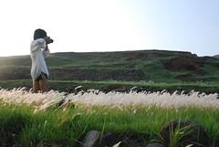 東嶼坪的小芒花草原