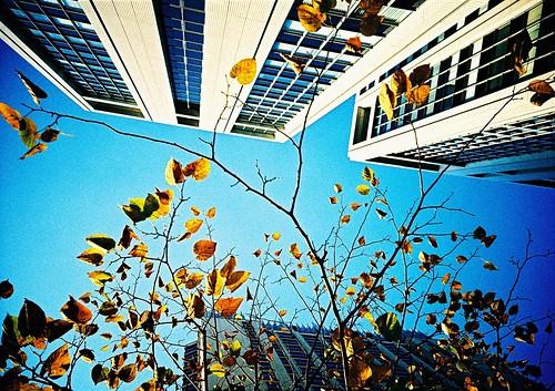 Tokyo,fall in love