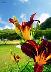 Parque da Cidade - Salvador/BA (I.Modon) Tags: trees brazil sky flower tree verde green colors grass brasil cores geotagged flor cu bee vermelho abelha amarelo grama bahia salvador rvore rvores parquedacidade itaigara paquedacidade geo:lat=12997177 geo:lon=38474057