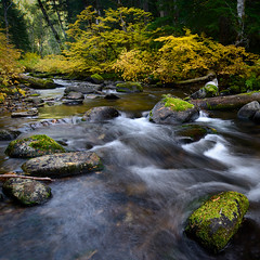 more stillwater (Mike Hornblade) Tags: fall oregon moss fallcolor flowingwater stillwatercreek