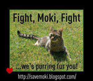 FightMokiFight-300