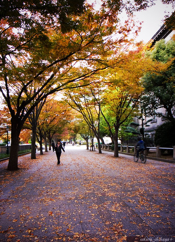 R0014537 : Nakanoshima Autumn Walk