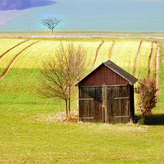 with a lonely tree behind ( Peter & Ute Grahlmann ) Tags: tree green art nature field yellow rural germany landscape spring hut 1001nights wow1 wow2 wow3 wow4 100faves wow5 50faves 35faves colorphotoaward saariysqualitypictures