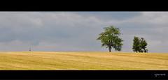 Rencontre furtive (Excalibur67) Tags: trees nature landscape nikon explore arbres alsace paysage d90 vosgesdunord