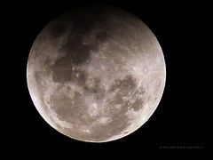 Noite de Eclipse (Giancarlos F. Martins) Tags: moon st se eclipse si sl lua sa gian sg challengeyouwinner eclipselunar duetos frenteafrente giancarlos 15dejunho lumixfz40 nanaturezainnature giancarlosferreira