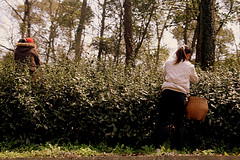 IMG_6516 (Sam's Exotic Travels) Tags: china plants sam tea hangzhou greentea sams pickers tealeaves longjing travelphotos dragonwell teafarm pickingtea longjingtea samsays samsexotictravelphotos exotictravelphotos samsayscom chinafamoustea bakedbyhand