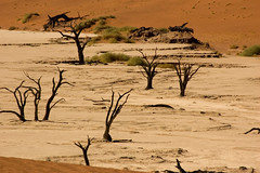 Dead Trees at Deadvlei (Patrick Costello) Tags: trees d50 sand namibia deadvlei namibdesert mywinners